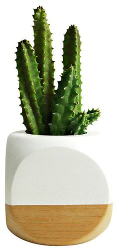 Geometric Succulent Cactus Planter, White contemporary-indoor-pots-and-planters