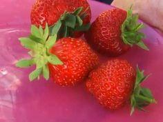 Сушилка для овощей и фруктов. Огурцы для засолки. Удобрения для свеклы и огурца. - YouTube