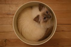 """What a precious pic!  Where did you find the 'kitty in a pot""""??? I want one."""