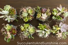 Small Succulent Arrangements for Birthday Gifts - Succulents and Sunshine