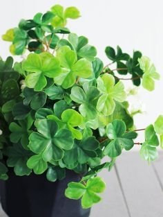 Artificial 4 Leaf Clover Bush In Two Tone Green