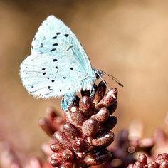 Zwergbläuling 😍  #schmetterling #insekten Austria, Instagram, Floral, Rings, Flowers, Jewelry, Insects, Pictures, Jewlery