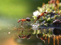 カタツムリやアリ、カマキリなど、人によっては敬遠しがちな小さな虫たち。...