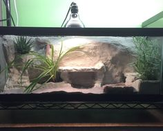 Image result for planted leopard gecko tank