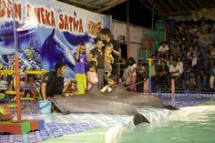 End The Traveling Dolphin Circus | Ric O'Barry's Dolphin Project