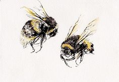 Drawings/Paintings | Fiona Campbell Art