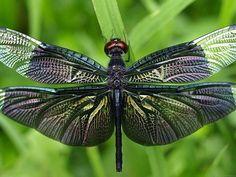 Beautiful Dragonfly (id: 170667) | Buzzerg.com
