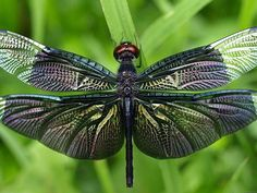 Beautiful Dragonfly (id: 170667) | Buzzerg.com