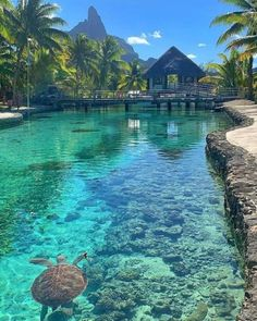 This is also one of my dream vacations where I want to go in the future, Bora Bora, French Polynesia. Vacation Places, Vacation Trips, Dream Vacations, Vacation Travel, Romantic Vacations, Romantic Getaways, Italy Vacation, Romantic Travel, Beautiful Places To Travel
