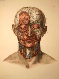 Jean Marc Bourgery - Traité complet de l'anatomie de l'homme