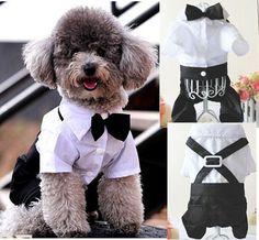 Boy Set Prince Tuxedo T Shirt Dog Cat Pet Clothes Jumpsuit Outfit Bow Tie s XXL | eBay