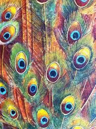 Image result for peacock pattern