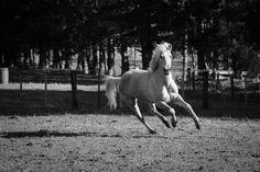 Emma Jane, Horses, Adventure, Photography, Animals, Photograph, Animaux, Photography Business, Horse