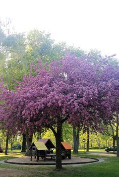 Frühling in den Wehranlagen in Schweinfurt - http://www.schweinfurt360.de/#visitfranconia #14Cities