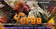 Sabung Ayam    Jadwal Sabung Ayam Online 15 – 21 Oktober 2016: Jadwal Adu Ayam Online Jadwal adu ayam cf88 dan jadwal… #JadwalPertandingan