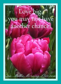 Love BIG, you may not have another chance.  #psychic #medium #psychicmedium #molliemorningstar #intuitive #spirit #spiritual #healing #afterlife