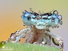Amazing Macro photos of insects covered with dew... click on link there are 11 of them.