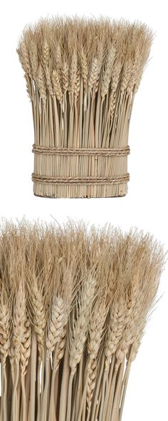 Bring a true slice of the countryside into your rustic or urban home with this quaint decorative piece. Bundled with grass rope, this charming Wheat Bouquet will prove a stunning centerpiece for a coff...  Find the Wheat Bouquet, as seen in the The Renovated Mill House Collection at http://dotandbo.com/collections/the-renovated-mill-house?utm_source=pinterest&utm_medium=organic&db_sku=114689