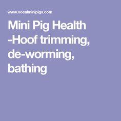 Mini Pig Health -Hoof trimming, de-worming, bathing Crab Rangoon Dip, Pot Belly Pigs, Mini Pigs, Pet Pigs, Farm Animals, Stuffed Peppers, Bathing, United States, Health