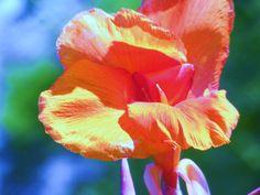 Fine art flower print by shanyannysnevanezers on Etsy, $25.00