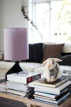 An adorable bookish bun!