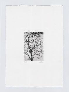 #copperplate #etching #tree #nature #aquaforte #print