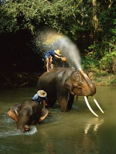 Swim with elephants in Thailand.
