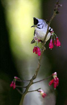 Little Bird by John&Fish on Flickr (cc)
