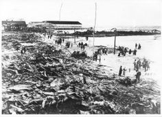 The Original Music Pier Can Be Seen Beyond The Hippodrome Pier Which Was A Total Loss Helen Berry  C2 B7 Ocean City Nj