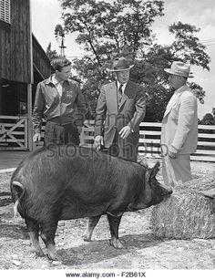 President Eisenhower Receiving An Aberdeen Angus Cow And