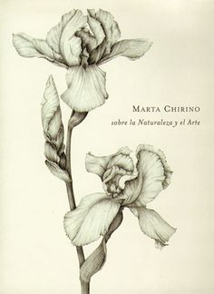 Marta Chirino . Sobre la naturaleza