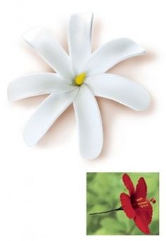 Tiare Gardenia Pick Foam Flower - Yellow Center * Click on the image for additional details. #hairupdos Hawaiian Flowers, Hawaiian Hair, Foam Flower, How To Make Hair, Tropical Garden, Styling Tools, Hair Pieces, Hair Clips, Your Hair