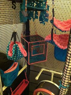 New cage setup! Glider Girls Toy Shop.