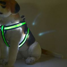 Your pup will stand out with Bright Buddy lighted dog leash!