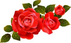 Large Red Roses Clipart Element