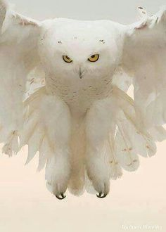 Harold, just stop. You can't look evil. You're all white. #OpticsOwl  ^White owl