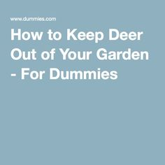 1000 Images About Control Garden Creatures On Pinterest Deer Deer Resistant Plants And Plants