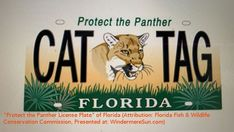 Porotect the Panther License Glate of Florida Florida State Government, Panther Cat, Florida Fish, Abc Activities, Apex Predator, Florida Panthers, Cat Tags, State Forest, Wildlife Conservation