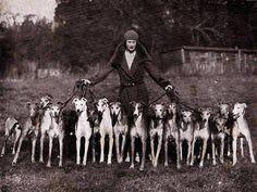 greyhound army