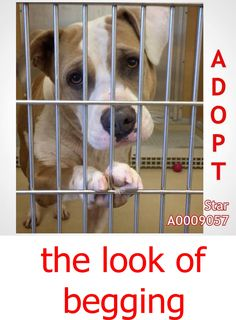 Star #A0009057 is about 5-years old, american bulldog, boy, he has been at the…