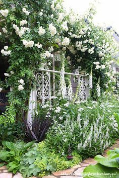 Yuuさんの庭へ | フローラのガーデニング・園芸作業日記