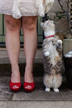 Calling all Cat Lovers photo idea