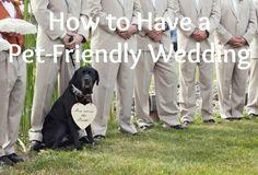 pet-friendly-wedding