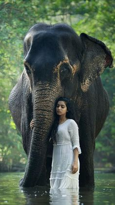 beautiful photo elephant and young woman. Asian Elephant, Elephant Love, Baby Elephants, Elephant Photography, Animal Photography, Photography Lighting, Mobile Photography, Newborn Photography, Photography Gloves
