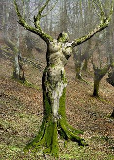 A Living Tree Sculpture. NOT Photoshopped BTW - as you can see here: http://pinterest.com/pin/221520875393469359/