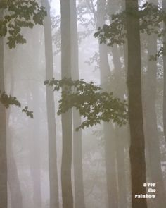 Misty woodland foggy forest mist and fog by OverTheRainbowPrints, $30.00