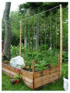 trellis tomatoes, how to grow a single tomoato in one square foot up a length of twine