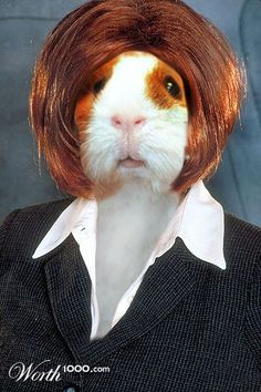 Guinea Pig is ready for a professional workday!