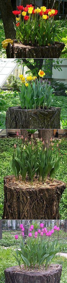 Креативный способ посадки луковичных | Наш дом