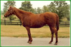 Soviet Problem(1990)(Filly) Moscow Ballet- Nopro Blama By Dimaggio. 4(C)x4(F)x4(F) To Bold Ruler, 5(C)x5(F)x5(F)x5(F) To Nasrullah. 20 Starts 15 Wins 3 Seconds. $905,546. Won Laurel Dash S(G3), Sacramento H, First Advance H. Valkyr H(Twice), Bay Meadows Budweiser BCH, Boo La Boo S, California Oaks, Miss California S, 2nd BC Sprint(G1), Sonoma H, Camilla Urso H. Died In 2011.